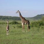 Giraffe me baby