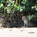Amazing, we saw the jaguar from the boat.