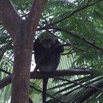 małpa, która podglądała nas w pokoju!
