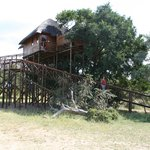 Pezulu Tree House Game Lodge Foto