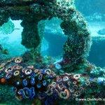 Wreck diving delights
