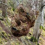 green man's face in the woods