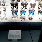 Très belle collection de papillons