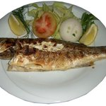 Levrek - Sea Bass