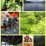 新緑の箱根