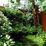 Doris Home's garden
