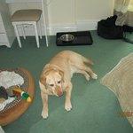 room dog friendly