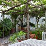 La pergola côté plantes & fleurs