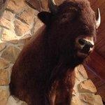 Buffalo decor in Gun Barrel