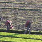 The garlic farmers from the roof top of the hotel