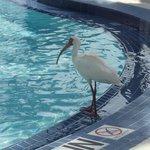 animales silvestres en la piscina