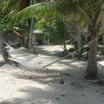 Lots of hammocks