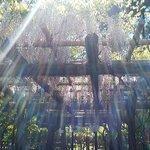 萬葉植物園の藤棚
