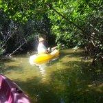 Canal through the mangroves