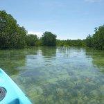 Kayaking in mangroves around island