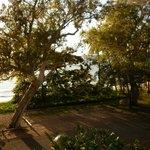 Views of the beach through the trees
