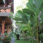 Le jardin luxuriant au calme