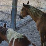 Country Meadows B&B Foto
