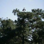 Birdwatching dentro da herdade
