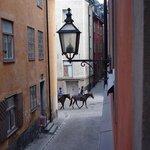 Pferde der königlichen Garde auf dem Weg zum Arbeitsplatz