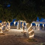 Blue Paradise - The Camps-Trevor Wedding