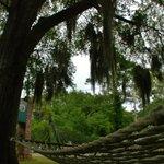 Moss-Draped Majestic Oak Trees