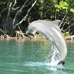 Dolphin at Dolphin Discovery