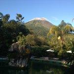 Palma Real at the Base of Arenal Volcano