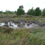 Wet bog around the centre