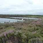 Artificial ponds for bog management