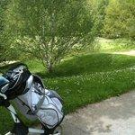 Les fleurs de mai tapissent les pelouses