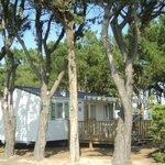 Mobil-home sous les pins