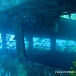 Wreck diving at its' finest