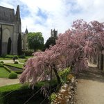 Tamarisk tree and inner courtyard