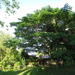 Big shady trees outside First Lodge