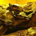 Lovely little turtles