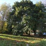 Arboles centenarios en el jardín de la Boleta