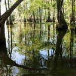 Up the bayou