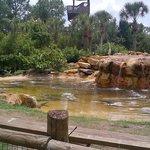 Crocodiles at rest