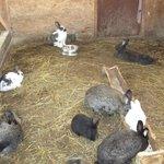 кролики, когда не едят роют подкоп:-)