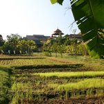 View to hotel and garden, from the hotel's rice paddies