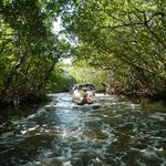 magical mangrove