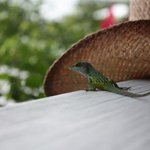 our new friend. joined us for breakfast!