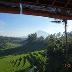 Rice Terraces beside Warung
