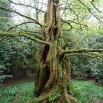 Many Rare Trees