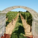 Silver Decoy Winery