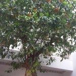 Les orangers du Patio du Riad