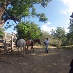 Getting the Horses for a Ride