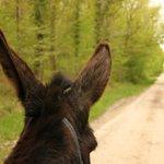 Les oreilles Berthe