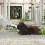 Cats living in the Dervish Museum grounds